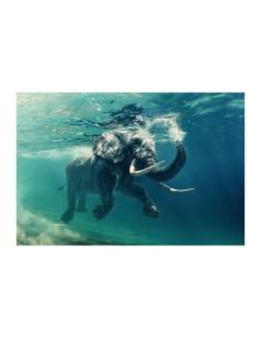 tablou-elefant-120x80